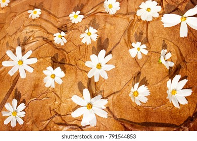 abstraction of white daisies on a brown background. Use for backgrounds, wall paper, tile floor, fabric, books, and anything else that you want.