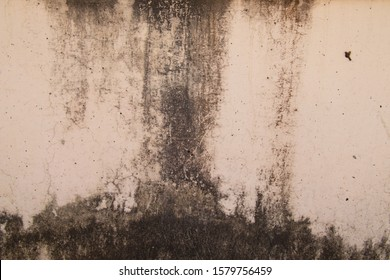 Abstract,Texture of old concrete wall,Grey Cement textured abstract background,old wall with lichen,Dirty white wall background close up moss texture on cement wall