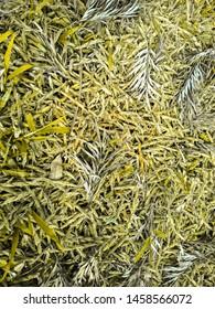 abstrak tekstur yellow nature at jungle
