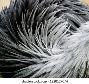 Abstrakt bird feathers