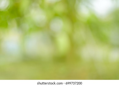 Abstruct blurred green leaves nature background in day time with bokeh and flare of light