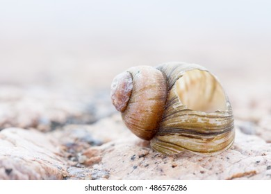abstruct detailed photo image of old damaged spiral snail shell