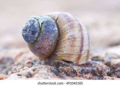 abstruct detailed photo of old damaged spiral snail shell