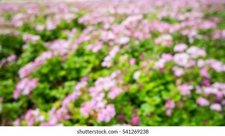 Abstruct flower bokeh background