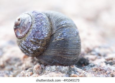 abstruct photo of old black damaged spiral snail shell