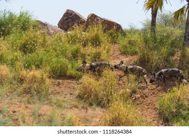 ABU dhabi on Lesser Bairam