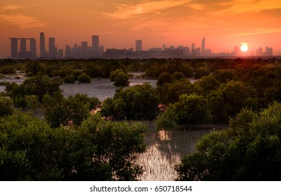 Abu Dhabi Reem island with mangroves trees in UAE