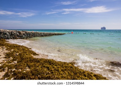 Abu Dhabi sea beach with seaweed, UAE, Sir Bani Yas island