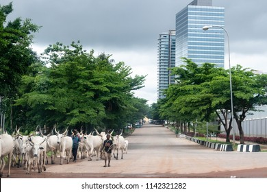 Abuja, NIGERIA - July 24, 2018: Abuja Central Business District with heavy rain clouds looming for raining season with fulani herds men and cattle walking in city no ranch