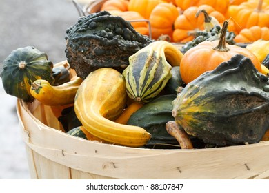Abundance of colorful squash and gourds having bold patterns and a variety of shapes are displayed at an outdoor farmers market. Horizontal composition.