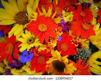 Abundance of colors in autumn.