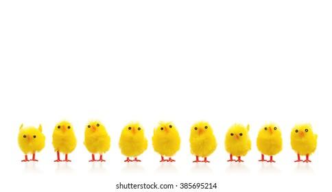 Abundance of easter chicks on a row, isolated