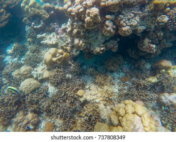 The abundance of shallow coral reefs in the Southern of Thailand, where is home to many small colorful small fish and marine animals.