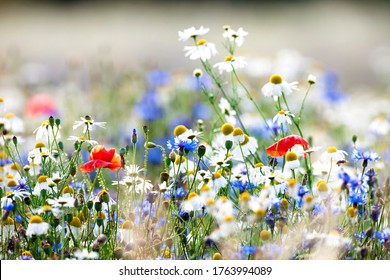 Überfluss von Wildblumen auf einer Wiese.