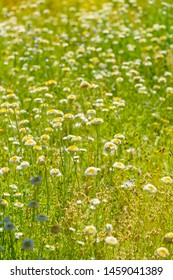 Abundance of wild flowersin bush land close to Alice Springs,  Northern Territory, Australia.