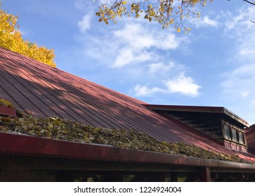 Abundance of yellow fall leaves collected on red metal roof upon leaf guard, in house roof gutter, with blue sky and puffy clouds, and yellow maple tree in background