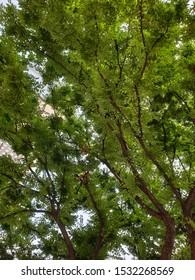 Abundant tree shoots over green leaves