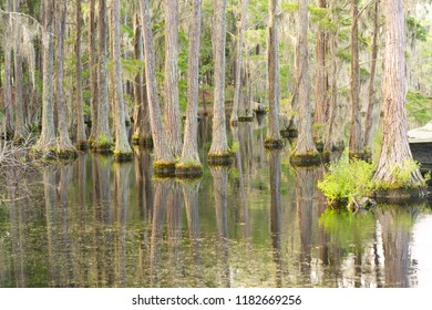 Abundant unseen wildlfie exists in this lush marsh area in the deep southern USA
