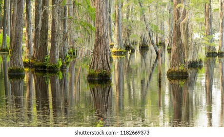 Abundant wildlfie exists in this lush marsh area in the deep southern USA