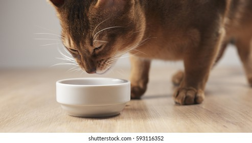 abyssinian cat eating meat from bowl on table, 4k photo