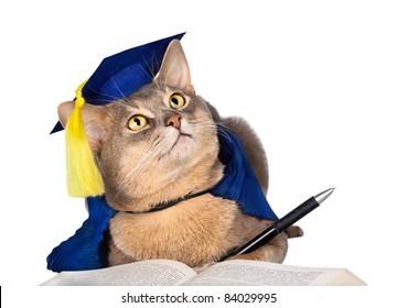 Royalty Free Cat Graduation Cap Stock Images Photos Vectors