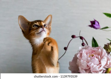 Abyssinian cat with a vase of flowers