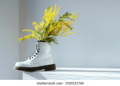 Acacia dealbata, silver wattle or yellow mimosa flower in white female boot on white home interior. Authentic photo. Women's day, mother's day. Springtime. Hard shadows. Spring shoes sale
