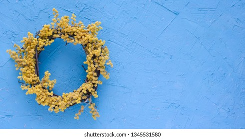 Acacia flower wreath on blue background. Acacia dealbata. Spring concept. Space to write. Flay lay, top view.