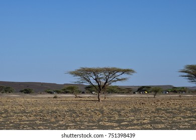 Acacia Tree landscape