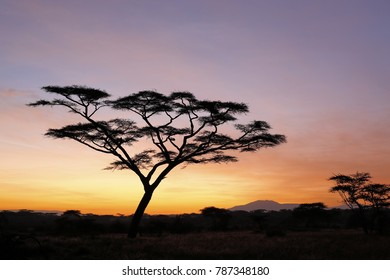 An acacia tree in silhouette at dawn. Tanzania, Africa.