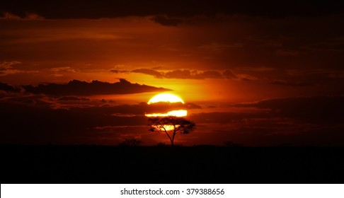 Acacia Tree Under the African Sunset