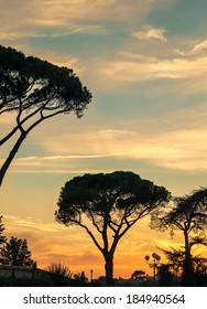 Acacia trees in Florence vertical image