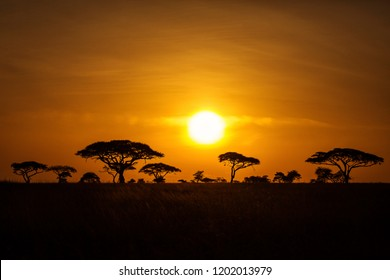 Acacia trees at sunrise with beatiful red sky in background. National Park of Serengeti Tanzania.