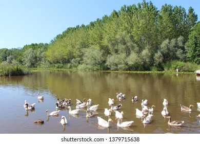 Acarlar Lake Floodplain Forest is one of important floodplain forests and wetlands of Turkey