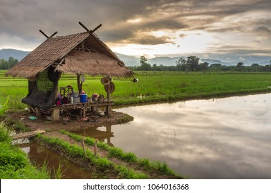 Accommodation of rice farmers
