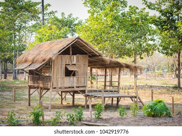 Accommodation in Rice Fields Made of bamboo Roof with grass.