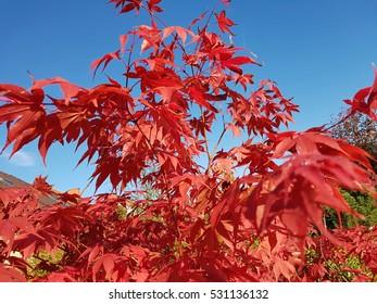 Osakazuki Images Stock Photos Vectors Shutterstock