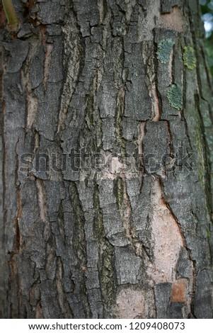 Acer Saccharinum Bark Close Stock Photo Edit Now 1209408073