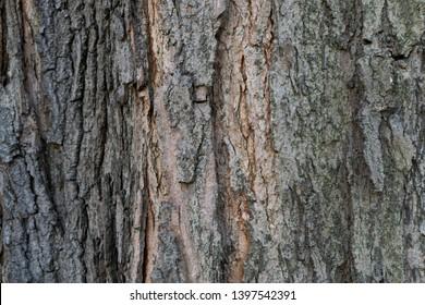Bark Maple Images Stock Photos Vectors Shutterstock