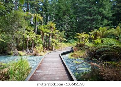 Acidic sulphur pools in the Redwoods forest park, Whakarewarewa, Rotorua, New Zealand.