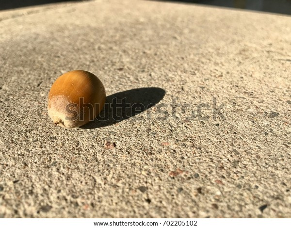 Acorn on cement angled