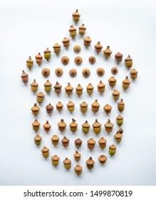 Acorn shape isolated make from oak acorns. Oak acorns on white background isolated.