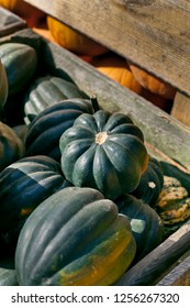 Acorn squash - Cucurbita pepo, turbinata, pepper squash or Des Moines squash winter squash dark green pumpkin with distinctive longitudinal ridges on its exterior and sweet, yellow-orange flesh inside