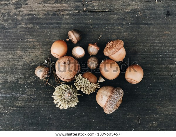 Acorns against a wooden background