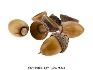 acorns are isolated on a white background