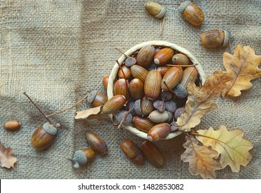 acorns and oak leaves on burlap texture background. autumn time concept. fall harvest season. top View. copy space.