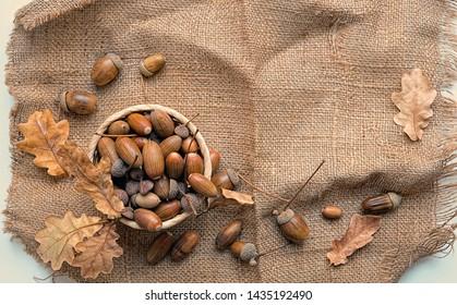 acorns on burlap texture background. autumn time concept. Autumn background for design. fall harvest season. Burlap rustic backdrop with acorns and oak leaves. top View. copy space.
