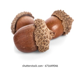 acorns on a white background ,close up