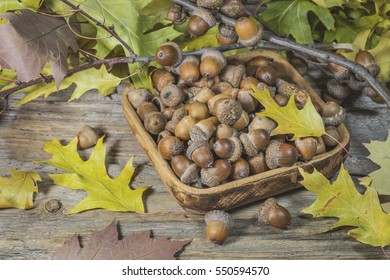 Acorns in a wooden plate