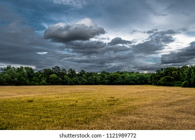 Acre with corn with forest and cloudy sky